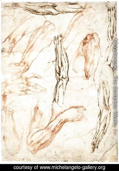 Michelangelo - Studies of Arms and Hands (recto)