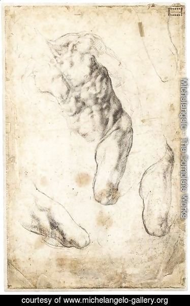 Michelangelo - Studies of a Male Torso and Left Leg (verso)