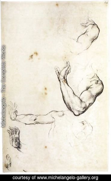 Michelangelo - Study of Adam