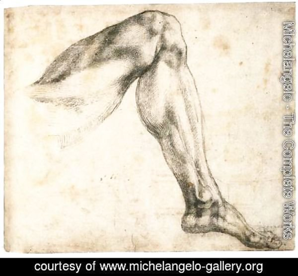 Michelangelo - Study of a Left Leg (recto)
