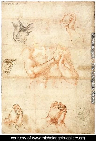 Michelangelo - Male Upper Body with Folded Hands (verso)